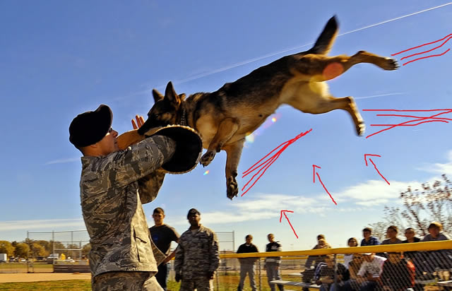 Military Dog Attack
