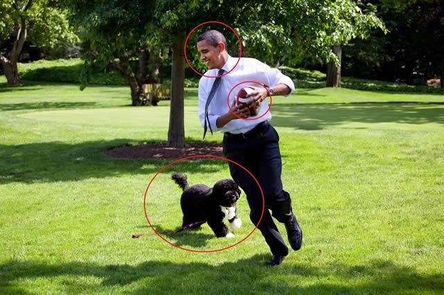 Obama Football Dog